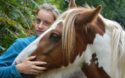 Heste: En ven at have og passe på!