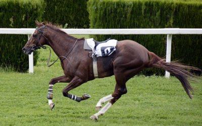 Forskellige typer heste til at ride konkurrence!